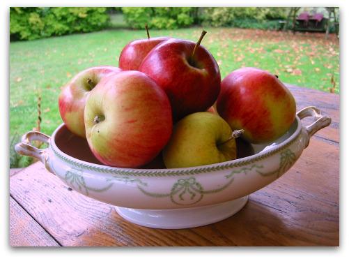 Planting Apple Trees: Varieties Matter