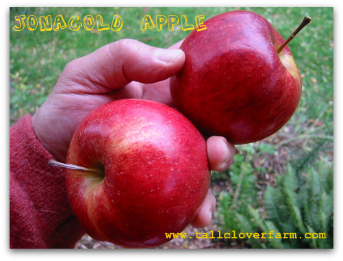 Great Apple Trees for Seattle