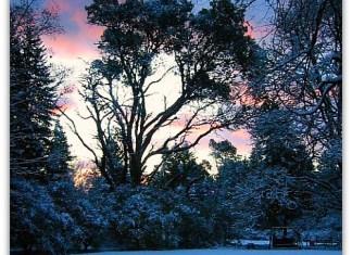 Madrona sunrise, snowy morning on Vashon Island