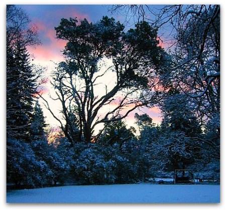 morning_snow_II