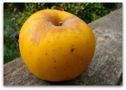 An Apple Named Opal, A Dog Named Boz