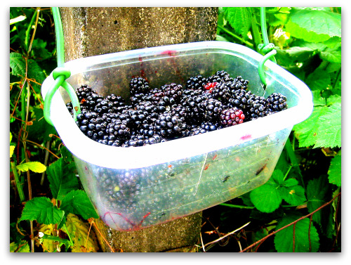 How to Build a Better Berry Basket (or Bucket)