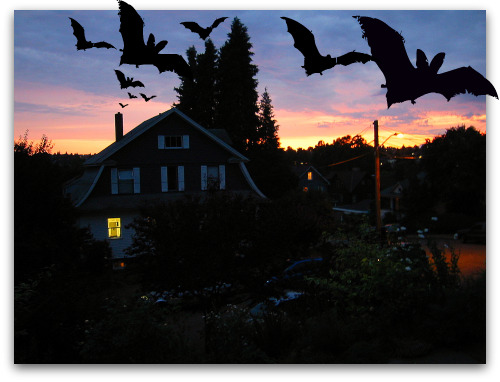 Bats flying out of Seattle Chimney