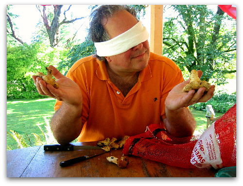 Foraging for Mushrooms: Bring a Blindfold