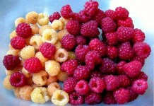 gold and red raspberries