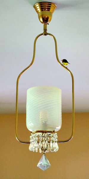 warbler in the room