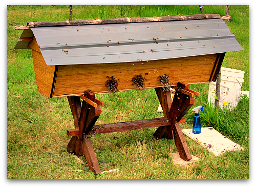 Beehive Sequel: Deluxe Top Bar Hive for My Bees!