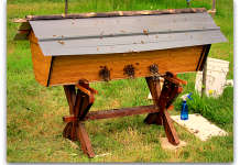 top bar hive bees