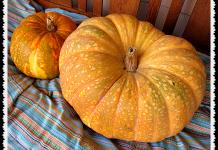 Iran pumpkin - tall clover farm