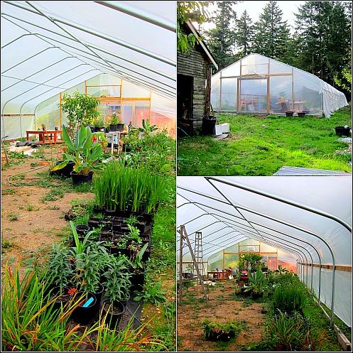 greenhouse beginning to grow