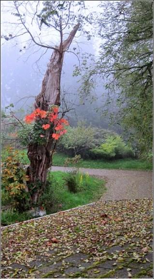 fall color vashon island