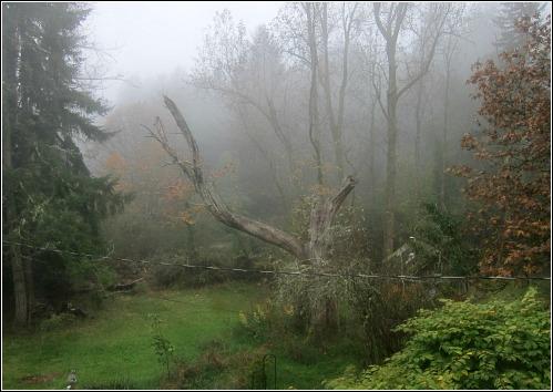 foggy woods Vashon island