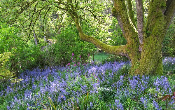 Bluebells ring in the day with their final performance.