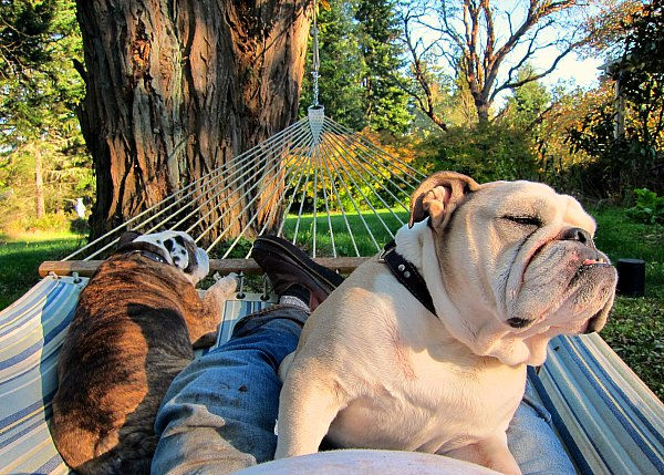 And Boz and Gracie would argue the view of the hammock testers is equally as beautiful.