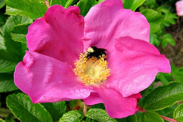 Best Plants for Pollinators: Tips and Regional Guides