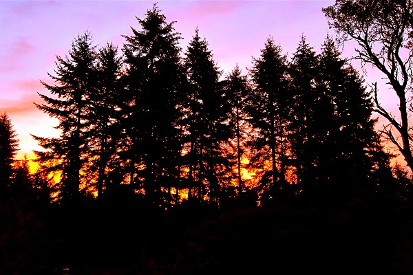 Sunrise peeks through a curtain of fir