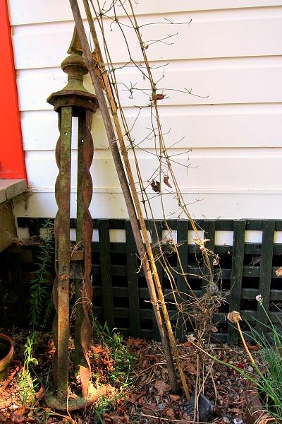 dead vine