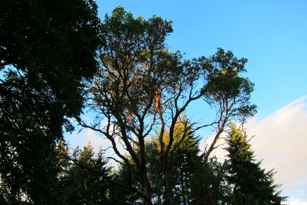 blue sky over vashon