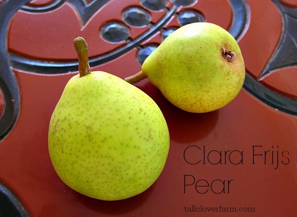 Clara Frijs pear