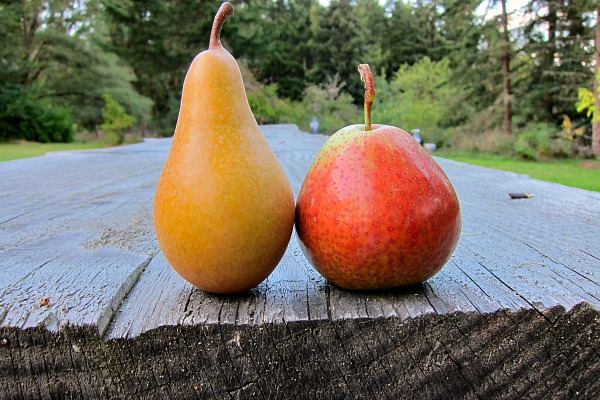 Conference and Forelle: The Bert and Ernie of Pears