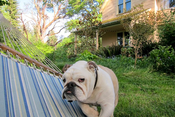 Boz's rewrite: Less Lawns, More Hammock Time