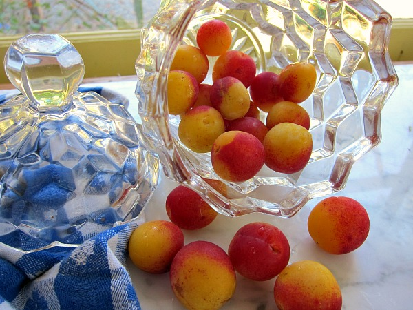 mirabelle plums nature gumdrop
