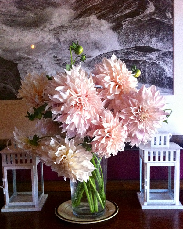 snapdragon bakery cafe au lait dahlias