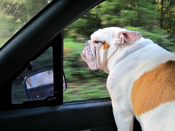 Buddy riding shotgun