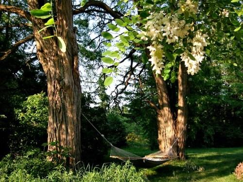 black-locust-tree-hammock