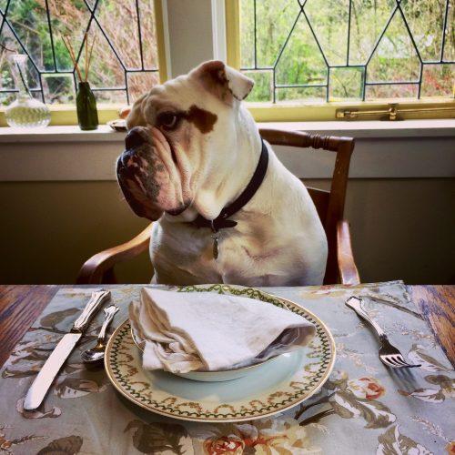 Bulldog Confidential: A Buddy Tell-All