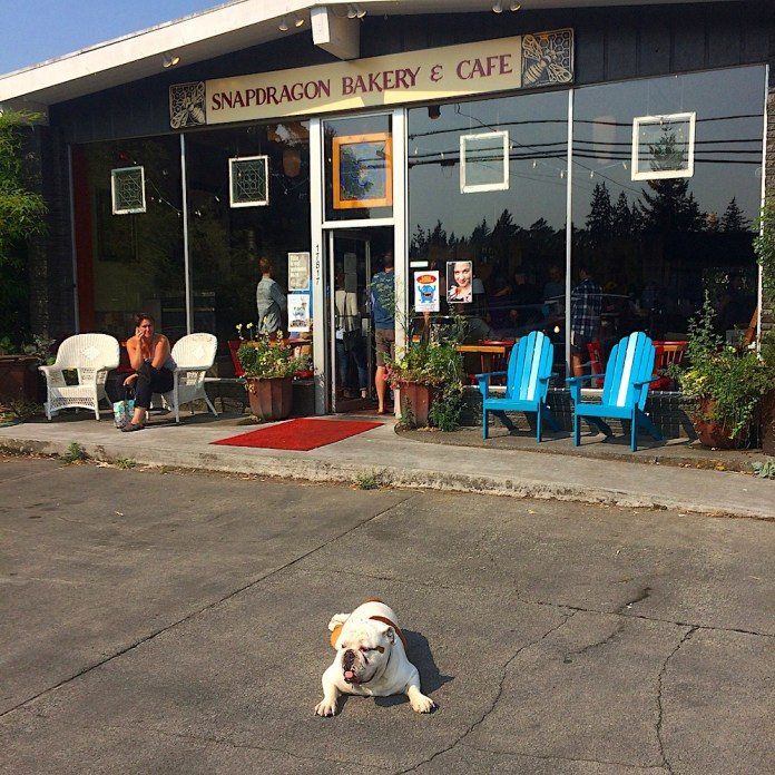 Snapdragon Bakery is everyone's favorite, including Buddy the bulldog.
