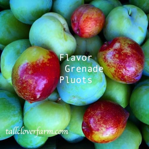 flavor grenade pluots and flavor queen