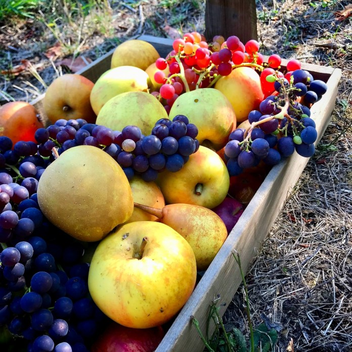 Favorite Fruit Trees: Apples, Pluots and Pears, Oh My!
