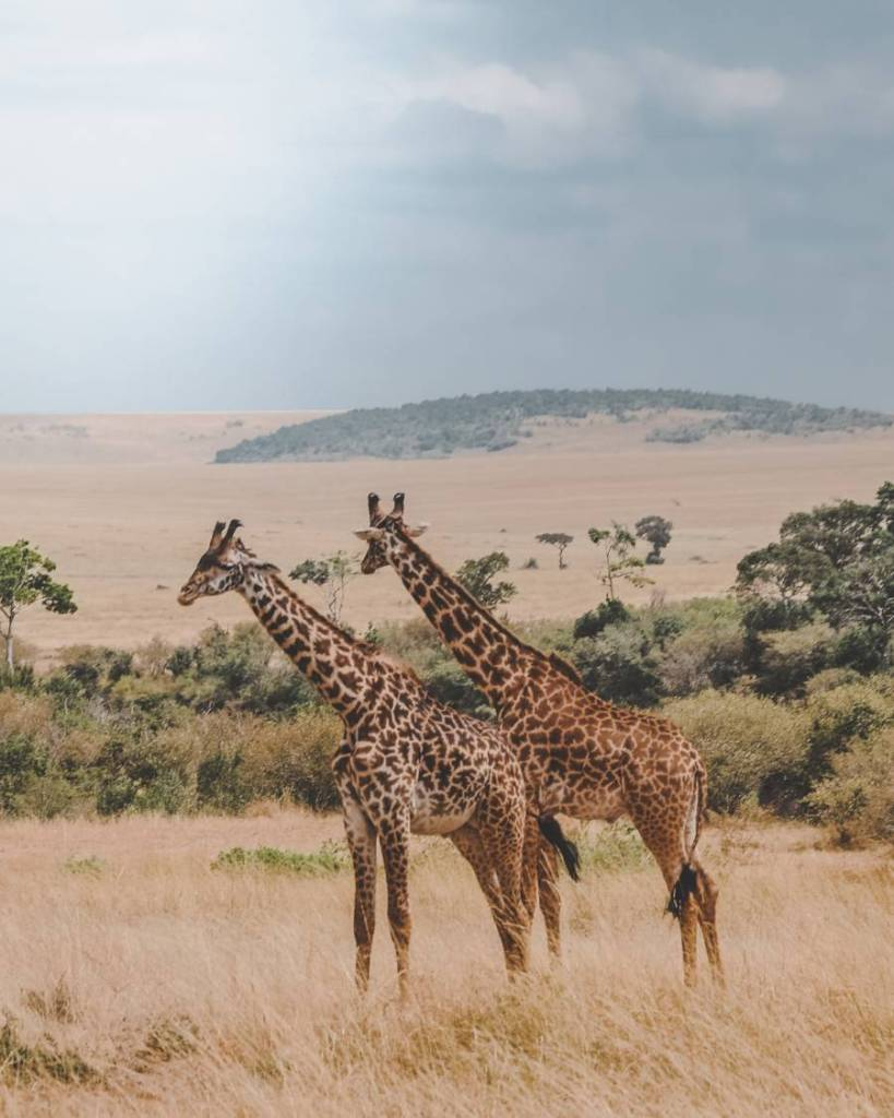 Very cheap! Flights to Nairobi from Chicago for only $614 return!