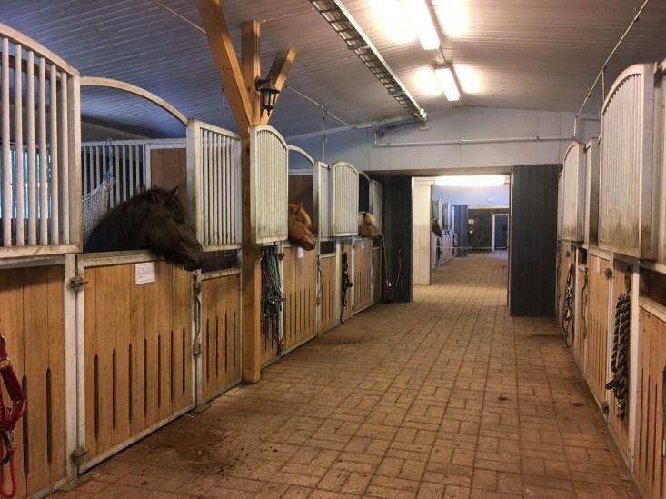 Hevoset katselevat käytävälle
