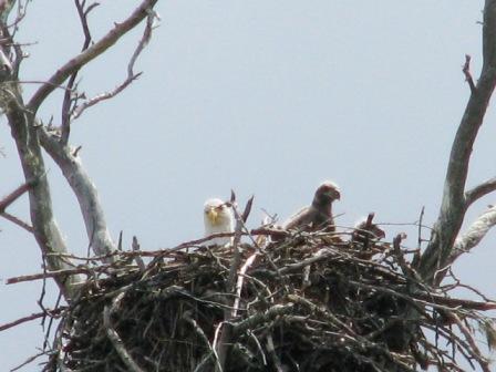 Mom and babies eaglecomp