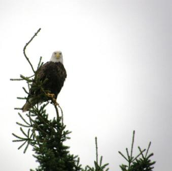 We call one of our eagles Eldon after Sandi's husband.