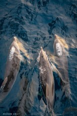 Dolphins play at the bow