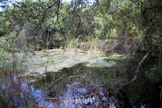 Gumbo Limo Trail, Everglades National Park