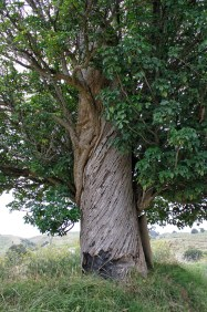 I loved the bark of this tree