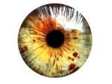 L'œil de la taupe et la psychanalyse. De l'endroit à l'envers