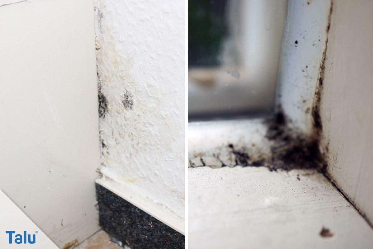 k chenschrank geruch entfernen wenn der m lleimer stinkt. Black Bedroom Furniture Sets. Home Design Ideas
