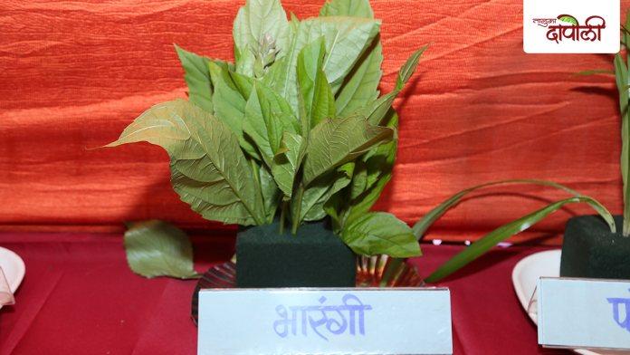 Bharangi - Ranjbhaji www.talukadapoli.com