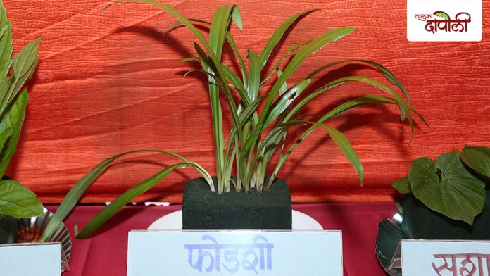 Fodshi- Ranjbhaji www.talukadapoli.com