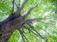 太陽光と木