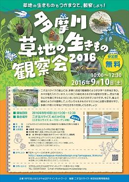 イベント情報 多摩川生きもの観察会