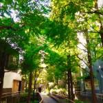 新宿遊歩道公園
