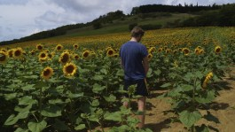 Watering the sunflowers