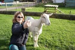 Goat selfie?