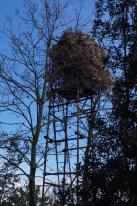 Pigeon hunting posts